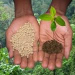 Минеральные удобрения природного происхождения