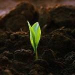 Преимущества внекорневой подкормки растений