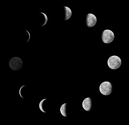 Фазы луны в домашней гидропонике