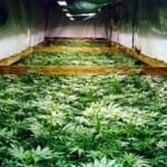 Урожай на воде — гидропоника