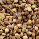 Выращивание марихуаны в индоре из семян и клонов