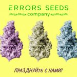 Ура Товарищи! День Рождения Компании Error-seeds!