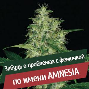 Купить семена конопли в Казахстане