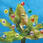 Необходимые элементы для питания марихуаны