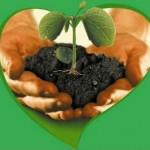 Питание растений: внесение органических удобрений