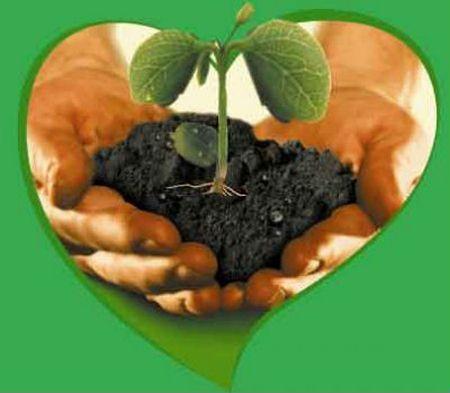 Питание растений внесение органических удобрений