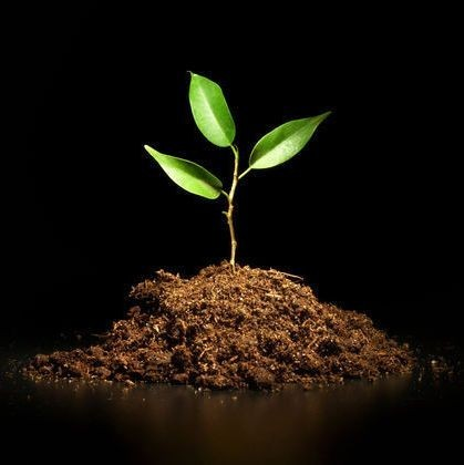 Эффективность гуминовых удобрений