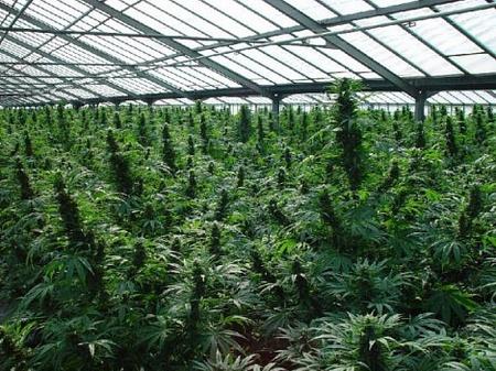 Малая оранжерея и проращивание семян
