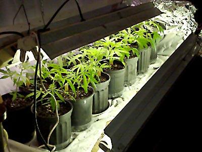 «Веревочный» автополив растений