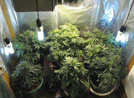 Выбор и подготовка помещения для выращивания конопли