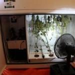 Постройка гроубокса своими руками: свет и вентиляция