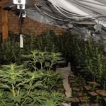 Выращивание конопли в помещении: правильное питание