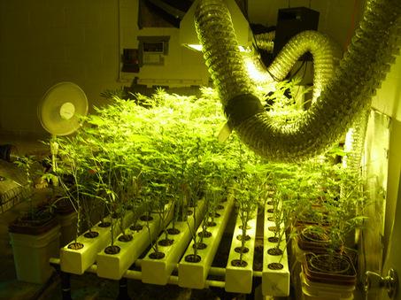 гидропоника-выращивание-марихуаны