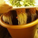 Аэропоническое выращивание марихуаны