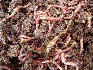 Удобрения при помощи червей