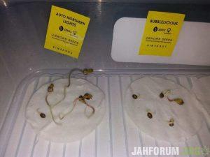 mj, weed, es, errors seeds, seeds, cannabis, marijuana, hemp, pot,