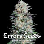 mj, cannabis, weed, seeds, errors seeds, cannabis seeds, hemp,