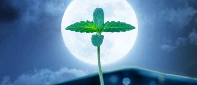 выращивание в индоре при жаркой температуре на улице, выращивание марихуаны ночью