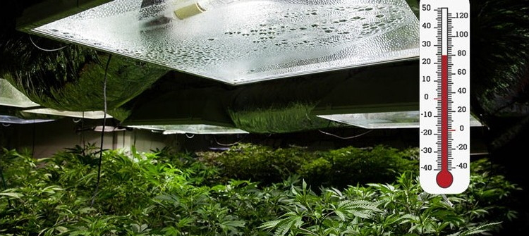 выращивание в индоре при жаркой температуре на улице